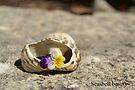 Seashell beauty by Jemma Richards