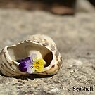 Seashell beauty by Jemma Richards