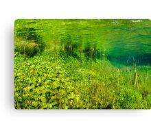 Green Scene. Canvas Print