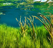 Channel Reeds. by James Peake Nature Photography.
