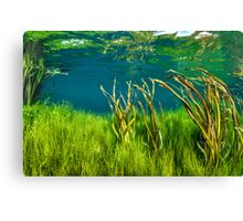 Channel Reeds. Canvas Print