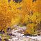 Landscape Painting - Fall on Bear Creek - 40 x 30 Oil by Daniel Fishback
