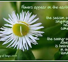 Song of Songs 2:11-13 by Paula Tohline  Calhoun