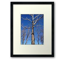 Lord of the Trees Framed Print