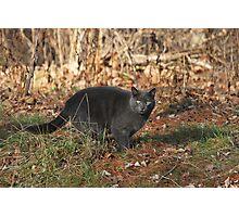 Backyard Cat Photographic Print