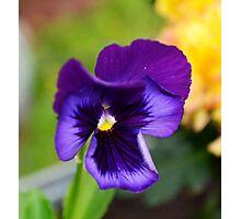 Purple Love Photographic Print