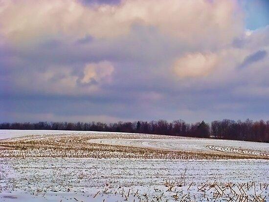 Winter in the Corn Field by vigor