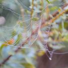 Fancy Web by ©Dawne M. Dunton
