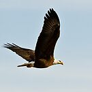 On Eagles Wings by Tim Denny