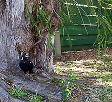 Magpie One - 31 12 12 by Robert Phillips