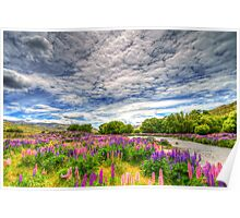 The Wild Lupins of Lindis Pass Poster