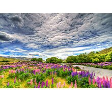 The Wild Lupins of Lindis Pass Photographic Print