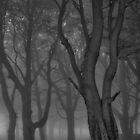 Moonlit copse by BenRobsonHull