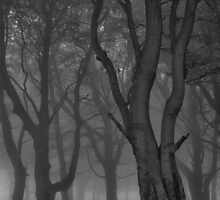 Moonlit copse by BenRobsonHull