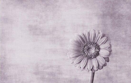 Fleur by Anne Staub