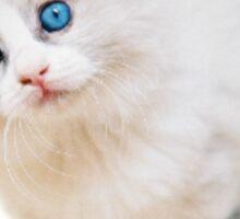 Cute cat sticker Sticker