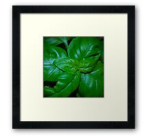 Fresh Basil Framed Print