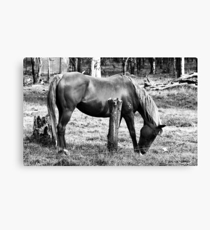 Warm Graze Canvas Print