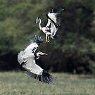 """""""The Duel of the Herons # 1"""" by debjyotinayak"""
