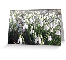 snowdrop carpet Greeting Card