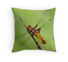Broad-bodied Chaser Throw Pillow