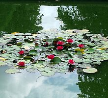 Water Lilies and Reflections by artyfax