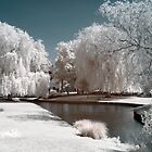 Willows & Water infrared by Gary Richardson