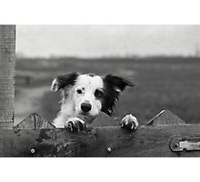 Guarding the fence Photographic Print