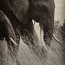 Protector- Masai Mara Kenya by Pascal Lee (LIPF)