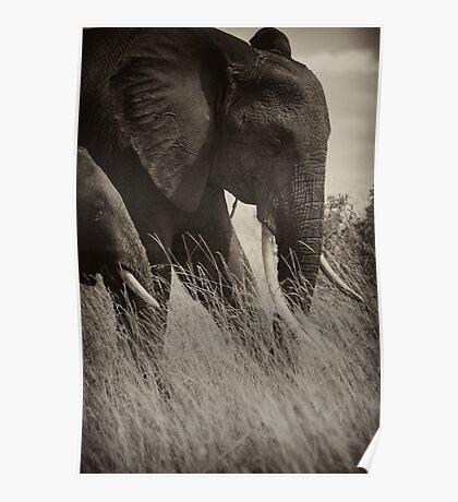 Protector- Masai Mara Kenya Poster