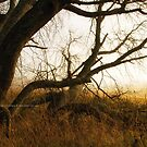 Old Tree by Andreas Stridsberg