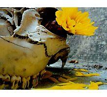 Petals and Teeth Photographic Print