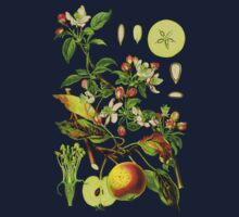 apple by Alex Magnus