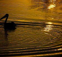 Pelican by glacierdave