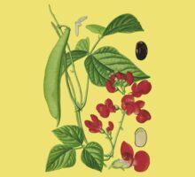bean by Alex Magnus