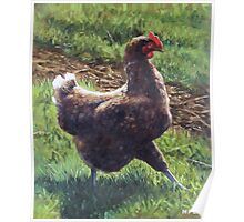 Single chicken walking around on grass Poster