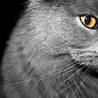I've got my eye on you by OaklandPhoto