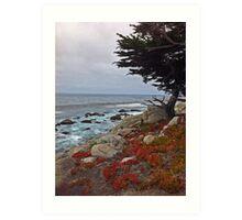 Seaside Cypress Art Print