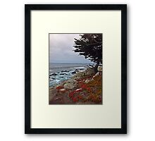 Seaside Cypress Framed Print
