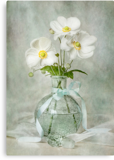 Anemone allure by Mandy Disher