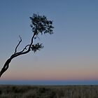 Lone Tree by glacierdave