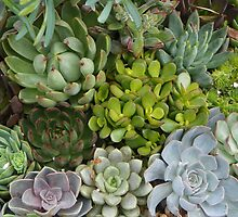 Succulent Plants by mussermd