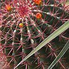 Colorful Cactus by Aaron Bottjen