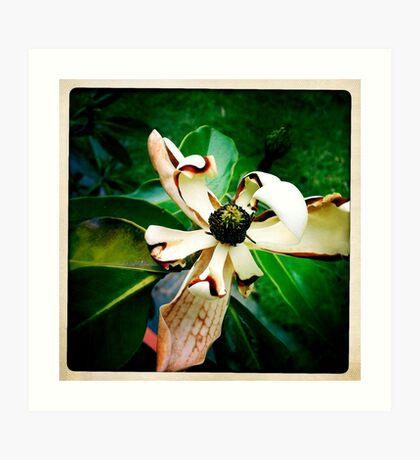 Magnolia Part I Art Print