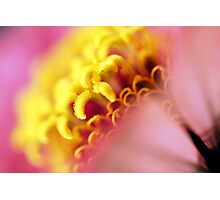 yellow & pink Photographic Print