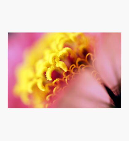 yellow & pink Photographic Print