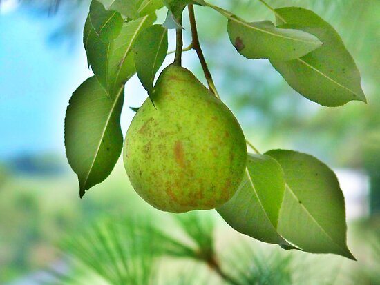 One Pear by James Brotherton