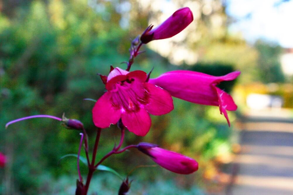 Flower Garden by Jess M