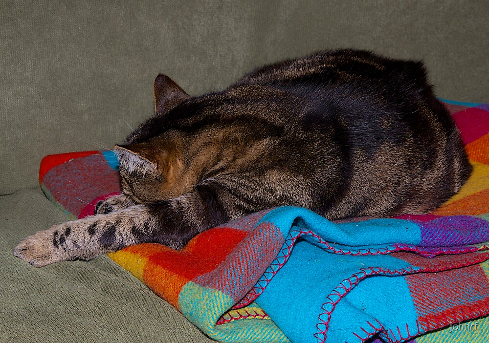 Jimmy Cat. Asleep in his favourite spot.  by johnrf