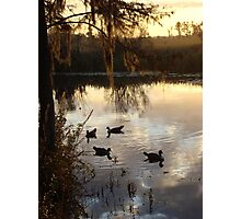 MUSCOVY DRAKES ON ECONFINA CREEK Photographic Print